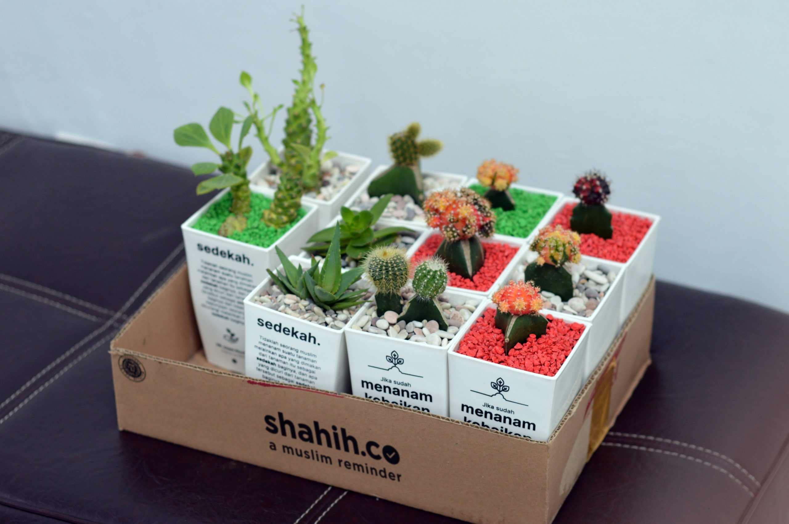 Is there a way to relocate your plants abroad