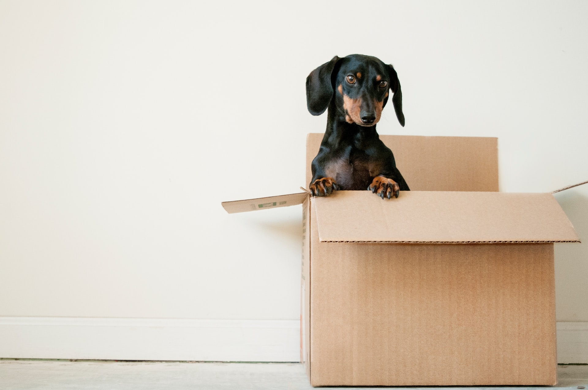 Vets advise on how to prepare your pet for moving out of state